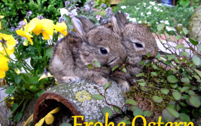Frohe Ostern an alle Wildtierfreunde!