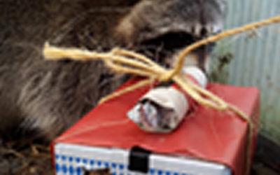 ☆ Wir wünschen allen Wildtierfreunden Frohe Weihnachten und eine besinnliche Zeit mit den Liebsten! ☆