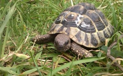 Zweites Landschildkrötengehege