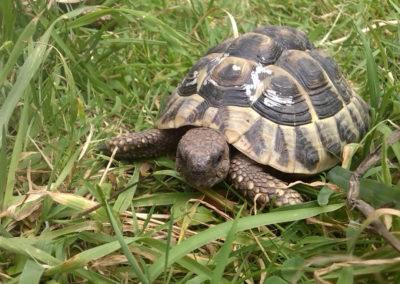 Landschildkrötengehege