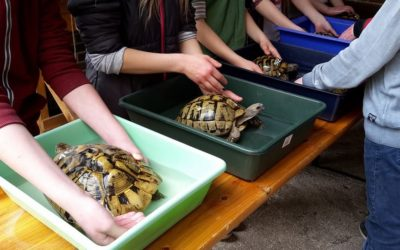 Wildschutz-AG bringt die Landschildkröten in den Frühling