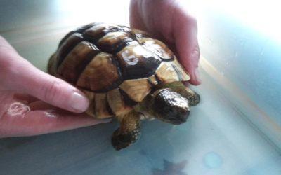 Schildkrötenbaden mit der Wildtierschutz-AG