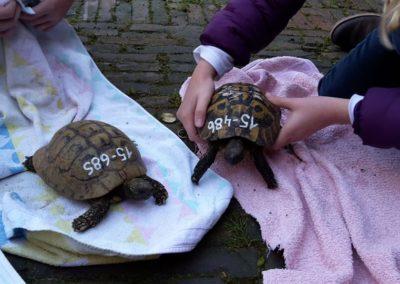 Schildkrötenbaden